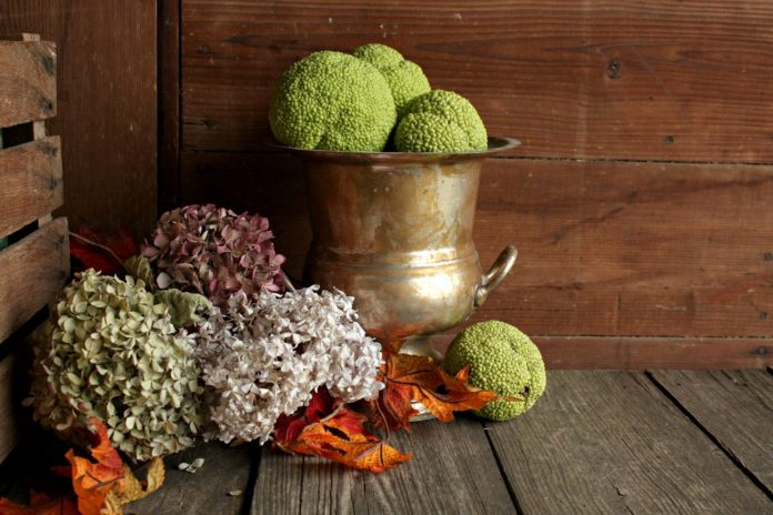 Decorate-a-Porch-with-Hedge-Apples