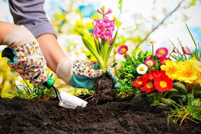 Avoid-Most-Common-Gardening-Mistakes