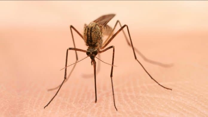 Control-Mosquitoes-Naturally