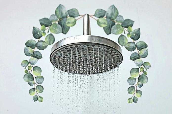 Eucalyptus-in-the-Bathroom
