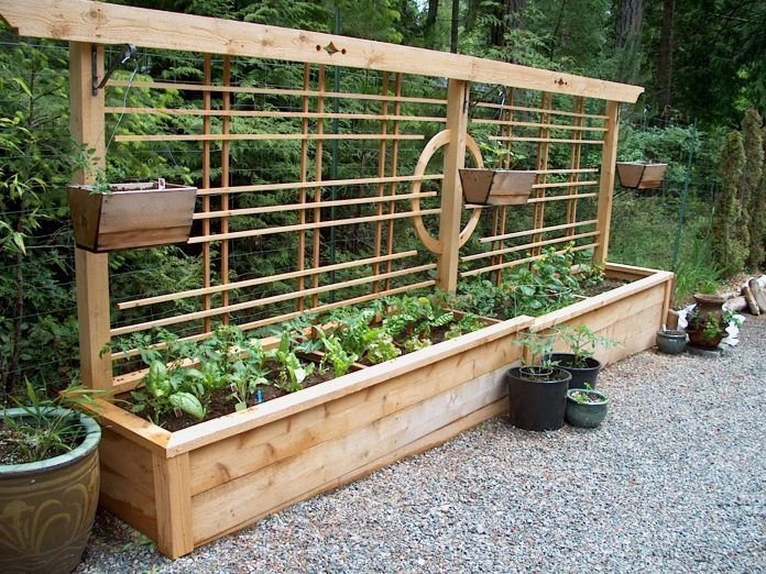Gardening-Accessible-with-Limited-Mobility