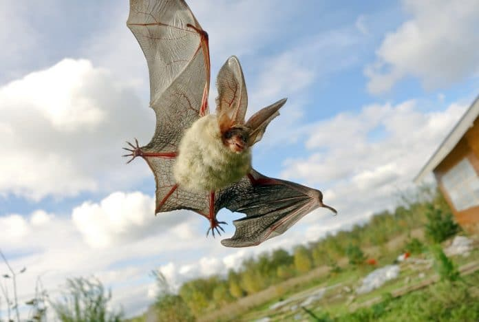 How-to-Get-Rid-of-Bats-in-Your-Attic