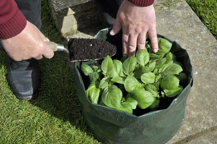 How-to-Grow-Vegetables-in-Plastic-Bags
