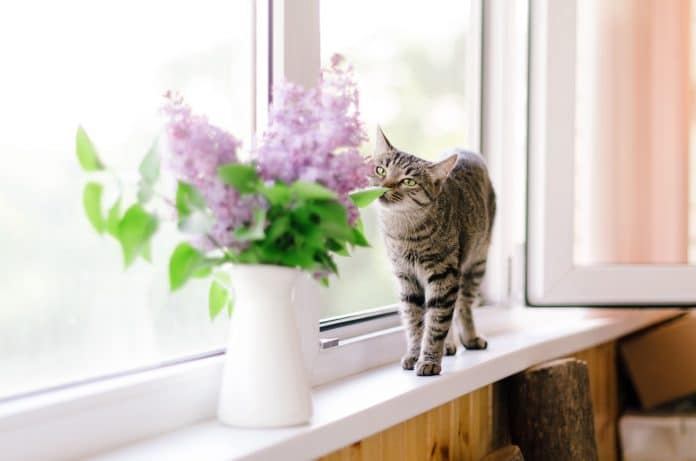 Keep-Cats-Out-of-Plants