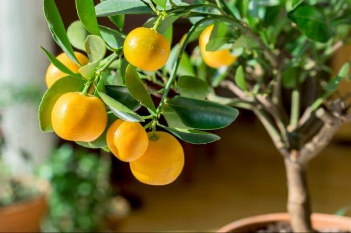 Planting-Fruit-Seeds