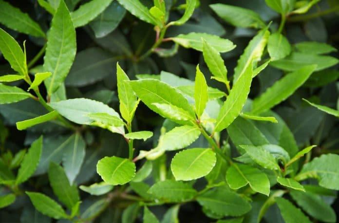 Medicinal-Trees