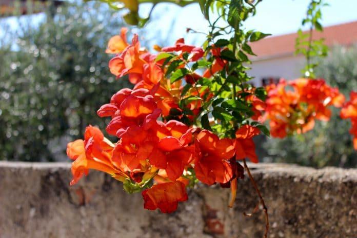 Orange-Jubilee-Bells