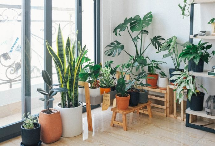 Small-Space-Garden-Planters