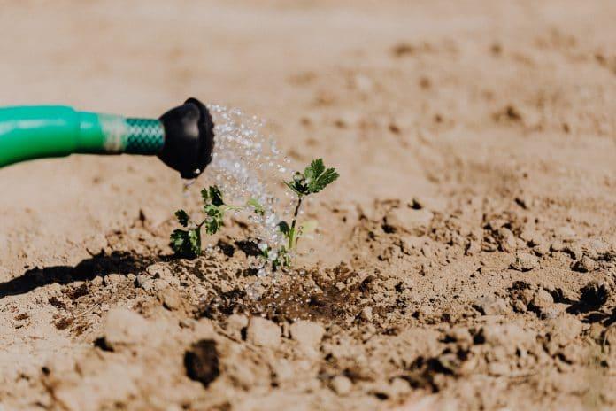 Water-Conservation-in-Garden